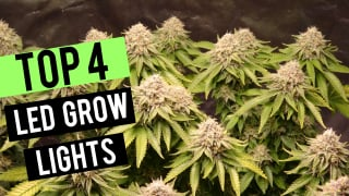 Top LED Grow Lights! - 2x2 Flowering Coverage Area