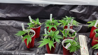 Ask not what your clones can do for you, but what you can do for your clones!