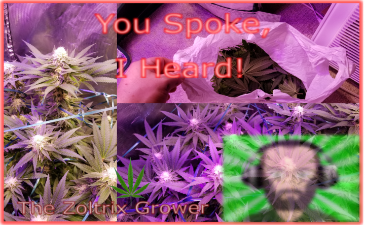 Haircut in Week 5? | Day 32 Flower | Buds Stacking on Strong!