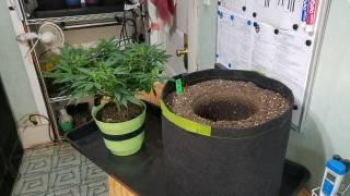 Organic Grow with Foxfarm Ocean Forest - Pot Size & Light Intensity -