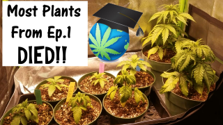 PLAIN WATER ONLY Grow  - Ep 2 - Attack Of The Soil Infection