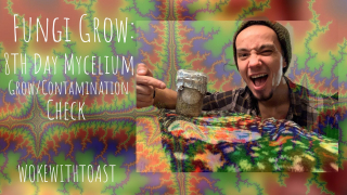 Fungi Grow: 8Th day Mycelium Growth/Contamination Check