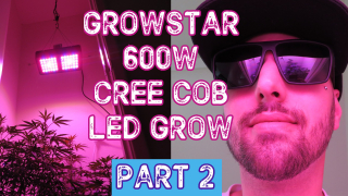 First Time Growing Cannabis With Growstar S600 600W Cree Cobb LED (PART 2)