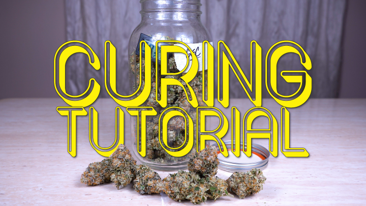 DRYING & CURING CANNABIS FOR BEGINNERS