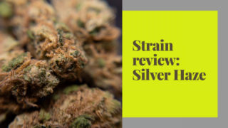 STRAIN REVIEW | SILVER HAZE