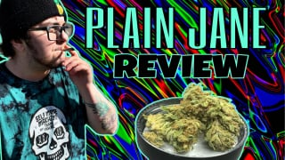 PLAINJANE CBD FLOWER REVIEW