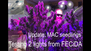 Forester's Flavor Forest (MAC seedling update +more)