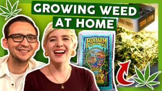 How To Grow Weed at Home: First Week with 3x Strains