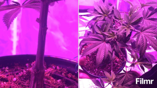 couple of my baby girls getting their grow on!