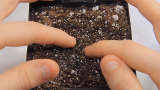 How to Germinate Marijuana Seeds | Crop King Seeds