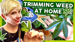 How to Grow Weed at Home: Week 2 & 3 Trimming
