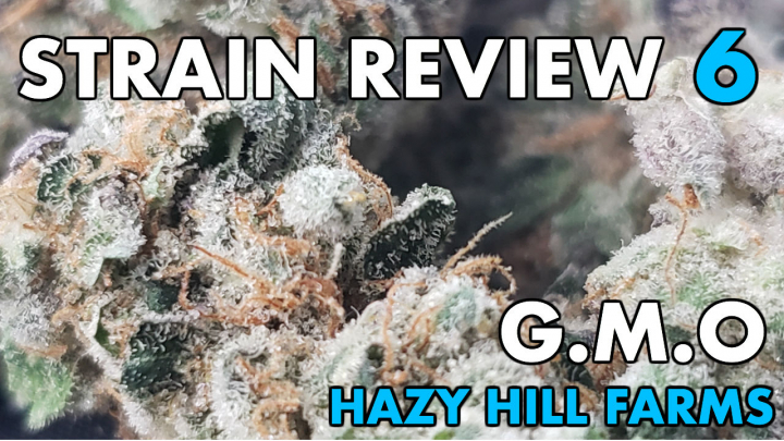 GMO STRAIN REVIEW 6 [ GROWERS ONLY CO ]