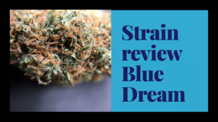 STRAIN REVEIW | BLUE DREAM