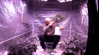 Cancer Update, Flower Tent #2 Weigh In, Dressing Veg Plants