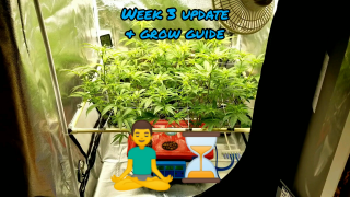 Week 3 update Lava Cake