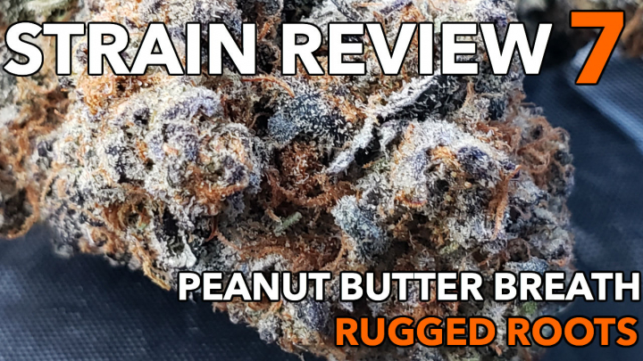 PEANUT BUTTER BREATH STRAIN REVIEW 7 [ GROWERS ONY CO ]