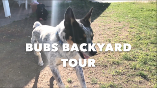 BUBS BACKYARD TOUR