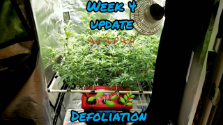 Week 4 in a EZHYDROGROW DWC hydroponic kit.