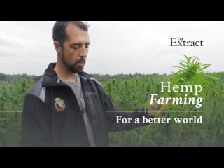 Hemp Farming - Growing Hemp for a Sustainable Environment | Organic Farming for Maximum Efficiency | The Extract