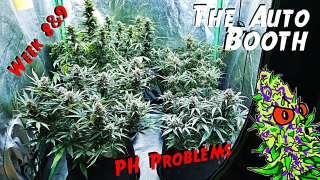 The Auto Booth Ep. 8 | 3 Strain Autoflower Grow Weeks 8 & 9 (PH Issues)