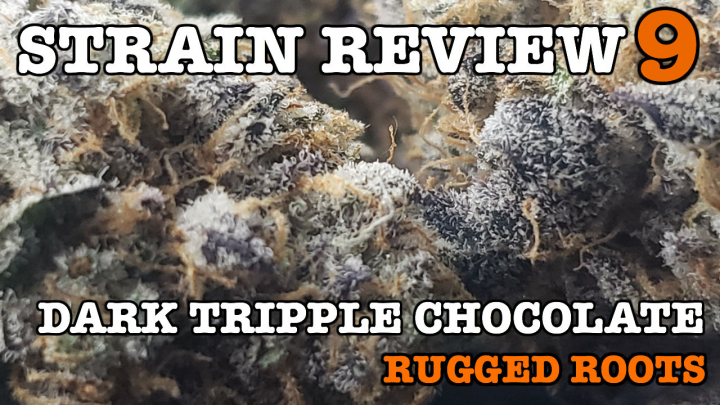 DARK TRIPPLE CHOCOLATE STRAIN REVIEW 9 [ GROWERS ONLY CO ]