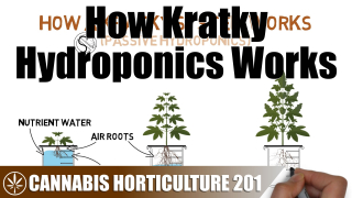 How A Kratky Passive Hydroponic System Works