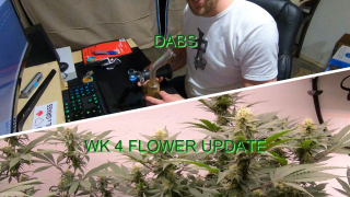 Dabs / WK 4 Flower Room Update