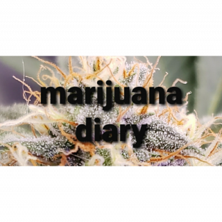 Marijuana Diaries (episode 7)