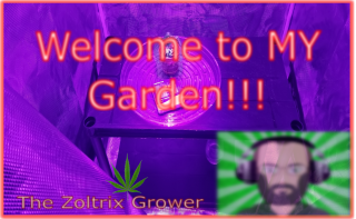 My NEW Garden | Grow Update | Harvest Update