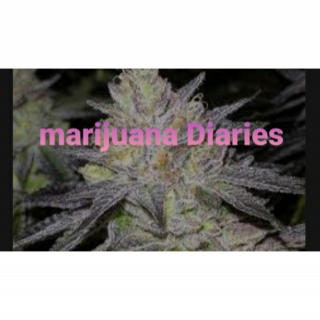Marijuana Diaries (Episode 11)