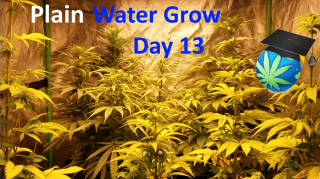 Plain Water ONLY Grow - Ep 3 - Long Live Fertilizing?