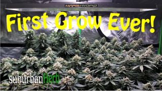 First Grow Ever! White widow photoperiods from Crop King Seeds