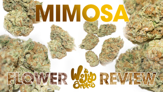 Mimosa Flower Strain Review