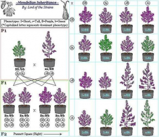 Which Purple Seeds Should I Add To My Order? Please Comment Your Suggestions Below