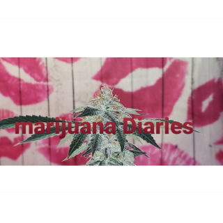 Marijuana Diaries ♡ Final Flash (Episode 13)