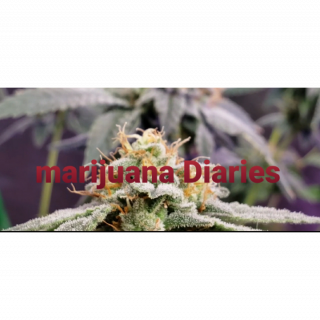 Marijuana Diaries (Episode 14)