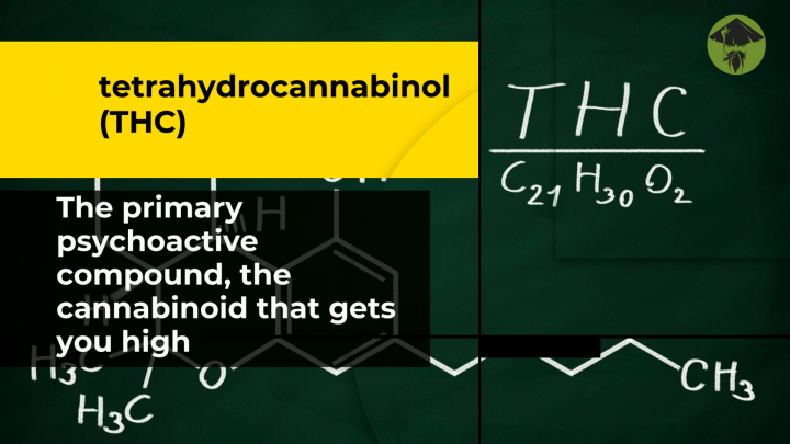 What are cannabinoids and how do they work? Cannabis Sensei