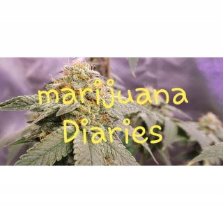 Marijuana Diary (Episode 15)