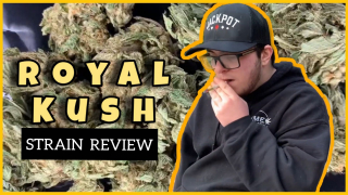ROYAL KUSH STRAIN REVIEW // DANKYFRANKY