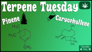 Terpene Tuesday - Pinene & Caryophyllene