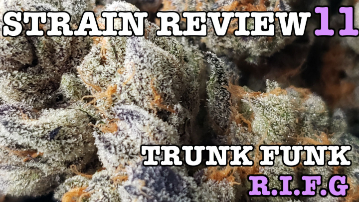 TRUNK FUNK STRAIN REVIEW 11 [ GROWERS ONLY CO ]
