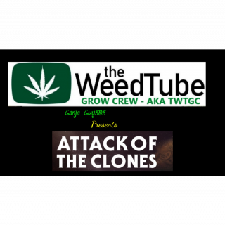 TWTGC- ATTACK  OF THE CLONES