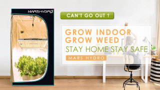 Grow Your Own Weed at Home with Mars Hydro LED Grow Light Grow Tent - Stay Home Stay Safe