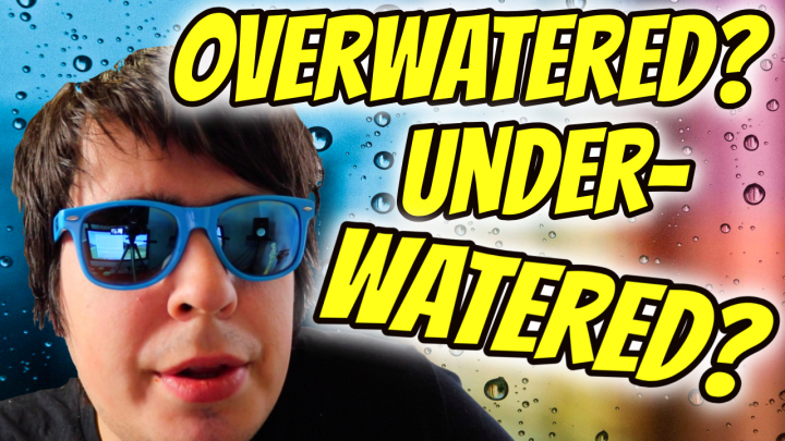 HOW TO FIX OVERWATERING AND UNDERWATERING!