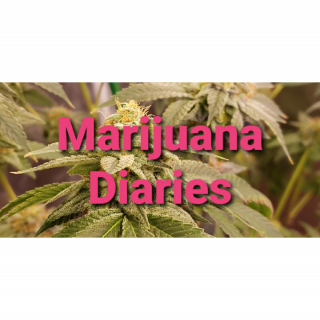 Marijuana Diaries (Episode 16)