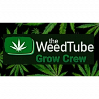 TWTGC ♧ Marijuana Diaries (Episode 18)