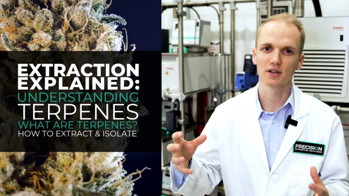 Extraction Explained: Cannabis Derived Terpenes - How to Extract and Isolate These Compounds