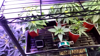 Green State showing his garden with