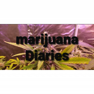 TWTGC  Marijuana Diaries (Episode 19)