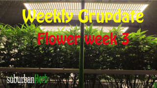 suBurBan heRb's weekly grow update. Week 3 Flower. White Widow photoperiods and Blue Diesel autos